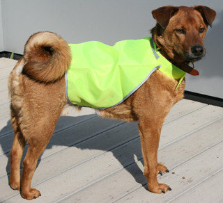Dog-Safety-Jacket